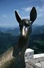 Bronze deer statue Picos de Europa region Spain