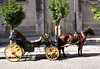 Horse and carriage near Seville Cathedral October 2007