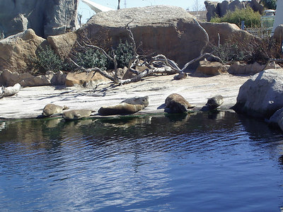 Seals relaxing at the aquarium.