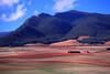 SPA-Near Mendaza, Navarra   IMG_0112
