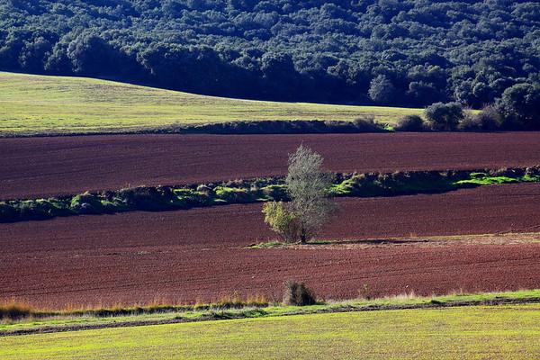 SPA-Near Mendaza, Navarra   IMG_0137