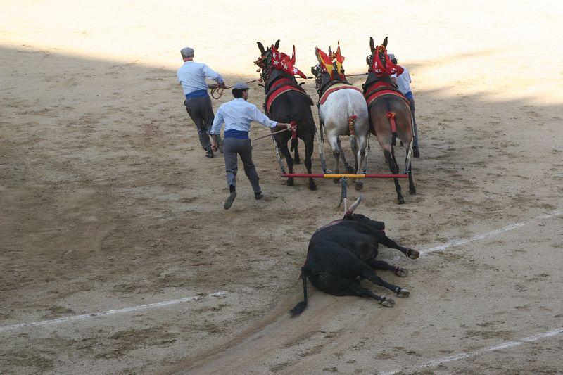 At the end, the bull always lost. Score Matadores 6, bulls zero