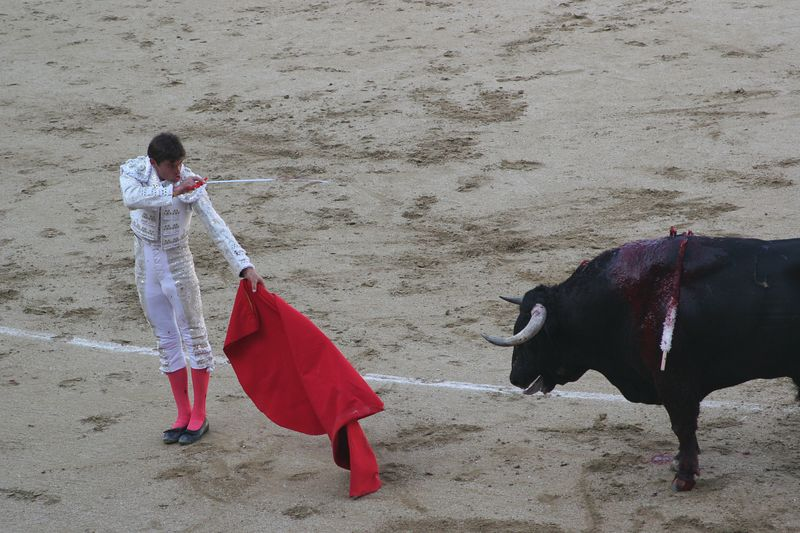 """The final thrust of the spear to kill the bull. Each """"fight"""" took about 20 minutes"""