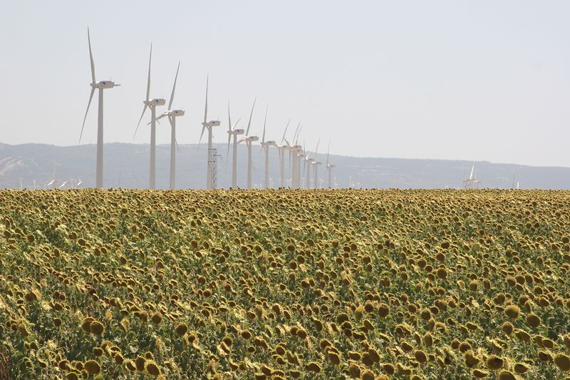 We pass fields of sunflowers and it seems like hundreds of wind generators