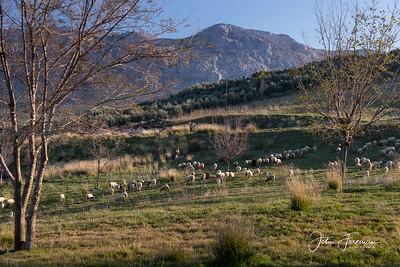 Shepherd, Antequera