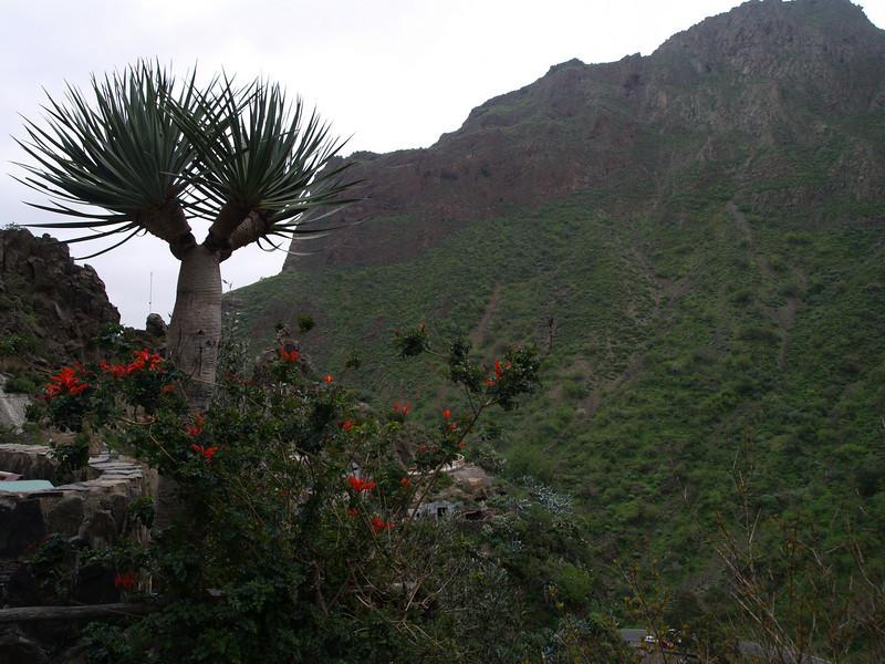 Barranco de Ingenio
