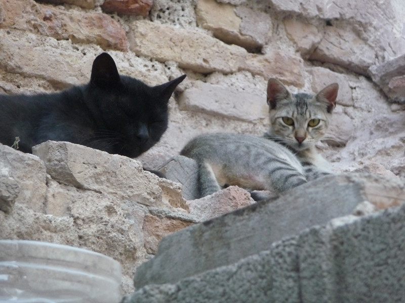 Feral cats at a construction site. They seemed fairly healthy and people had left bowls of dry food as well as canned food for them.