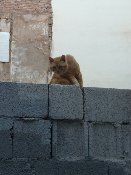 Feral cat at a construction site. They seemed fairly healthy and people had left bowls of dry food as well as canned food for them