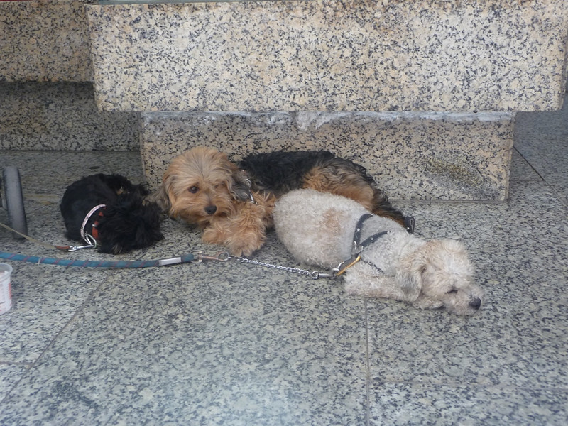 We saw these three little dogs several times, they belonged to an old man who sold lottery tickets on the street. They look a little bad here but when he was up walking around they followed him happily with bright eyes and tails wagging!
