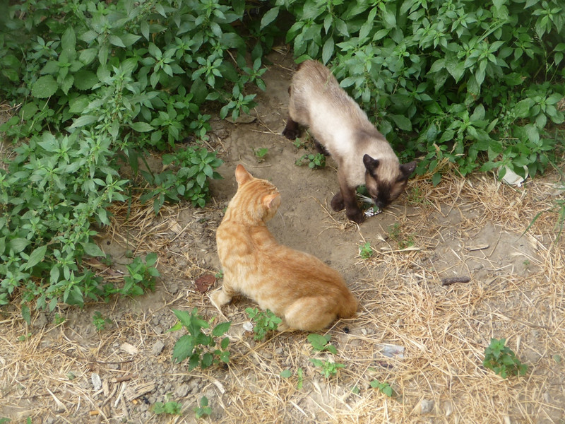 Standoff between two feral tom-cats down near the river in Granada where a fairly big colony was living.