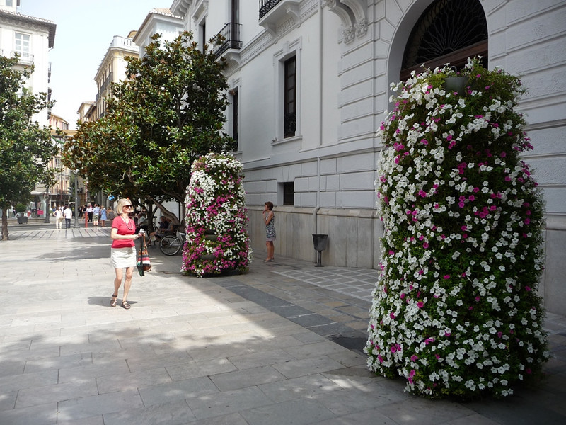 "Very beautiful ""trees"" made from stacked petunias, on a square near a public building in Seville."