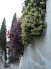Flowers on a wall in the Albaicin area in Granada