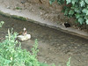 Feral cats by the river in Granada. This one leapt across to the other bank a moment after this picture was taken.