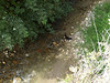 Kitty crossing the stream of the river in Granada