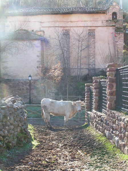 Una vaca cruza pasea como una más por las calles de Viniegra de Arriba