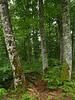 Irati, la selva de hayas al norte de Navarra