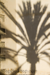 Palm Tree Shadow on Wall