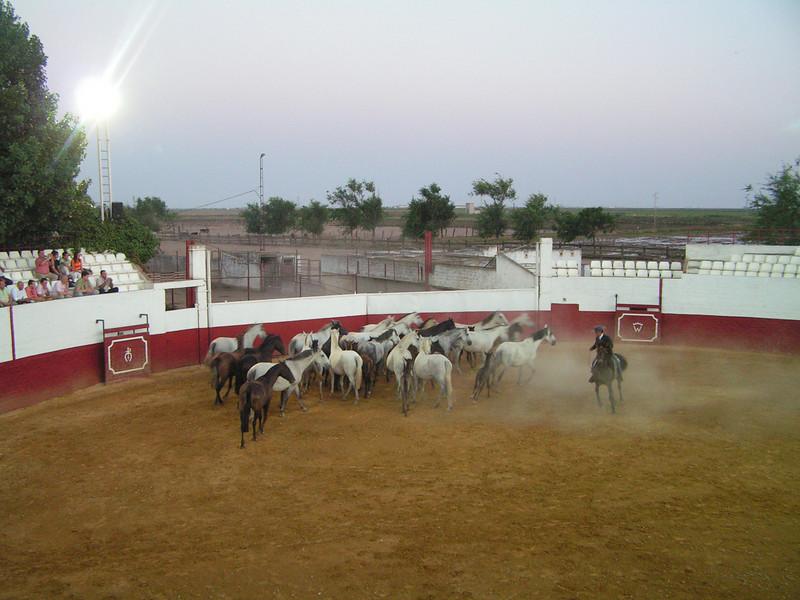 """Espectaculo ecuestre en la Hacienda """"El Rocio"""""""