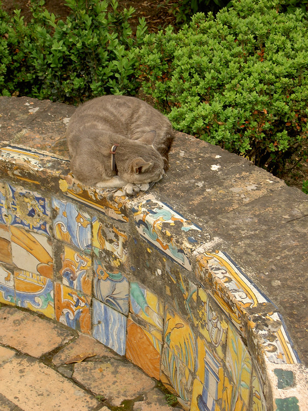 Alcázar tiles and cat