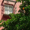 window and orange tree, Seville