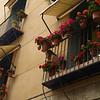 Clavelitos en la terraza