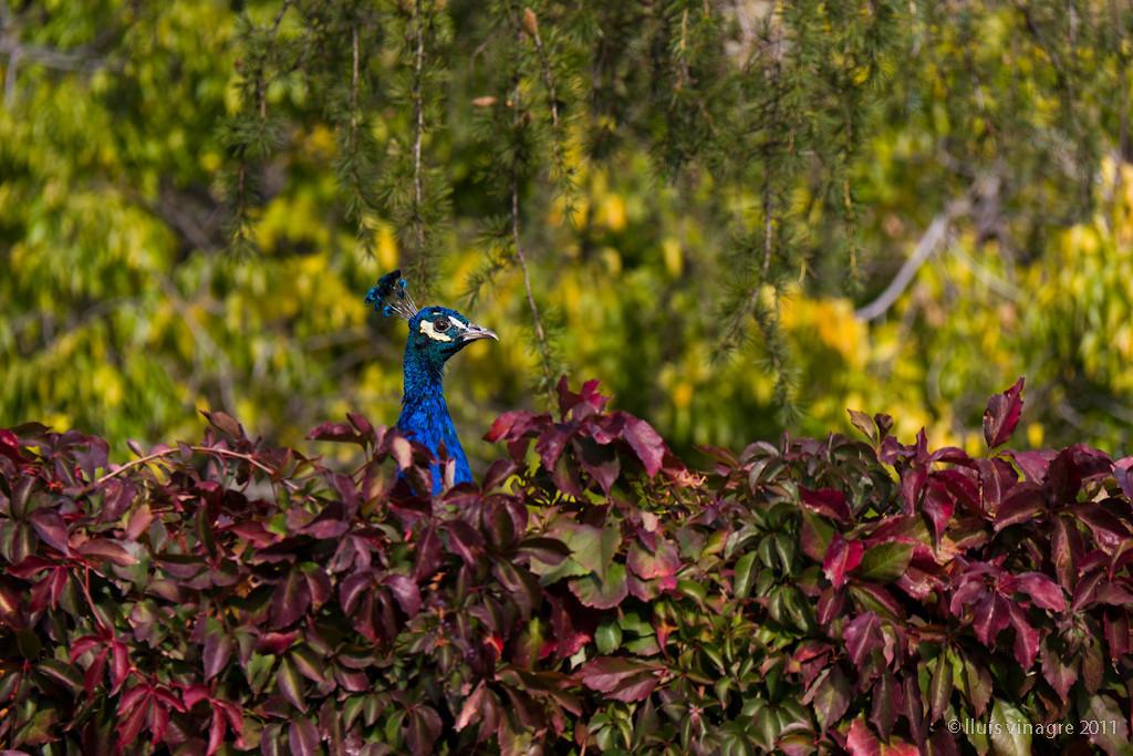 jardines de cecilio rodríguez, parque del retiro, madrid