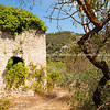 Old stone shed and wriggly dark barked stems of almond trees in autumn Val de Pop countryside, Spain.