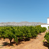 Citrus orchards In Valencia region Spain.