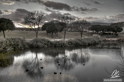 Ducks don't fear the rain
