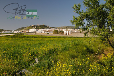 View of Estepa from the edge of an olive grove.