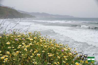 Daisies and rough surf along the coast, looking east toward Nerja.