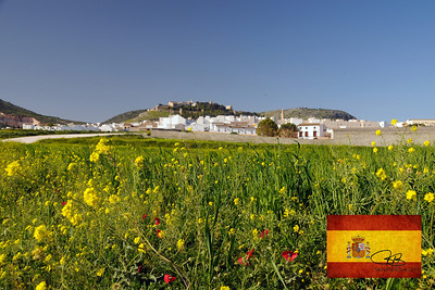 Field of flowers outside of Estepa, Spain.  On the freeway between Sevilla and Granada.