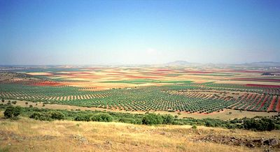 Reforesting, Barraco