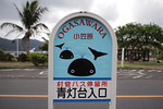 Pretty much everything in Ogasawara is whale or dophin themed