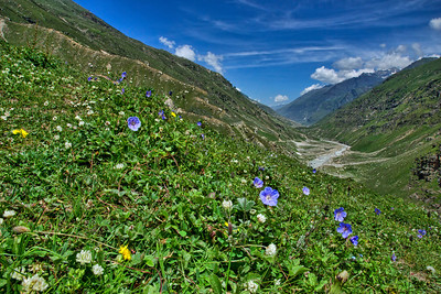 The valleys and the wild-flower dotted landscapes are far too common as you hike around!
