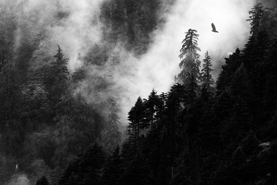 An eagle soars the hills amidst the fog - The only shot of Manali I bothered to take