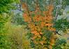 Fall color in Pennsylvania, 10-4-13.