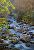 Little River Tributary, Great Smoky Mountains