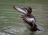 Wing Flap