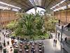 Madrid's Atocha atrium--an indoor jungle!