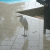 One of a couple of birds who hung around hoping to get fed