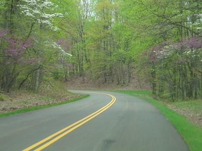Dogwood in bloom, Blue Ridge Parkway