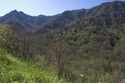 Great Smokey Mountains National Park