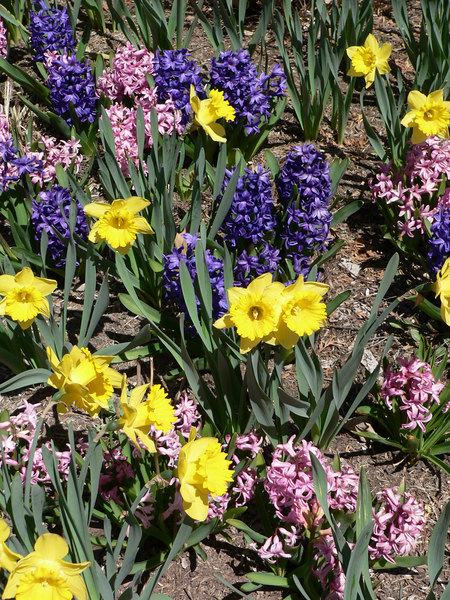 Spring flowers on the grounds