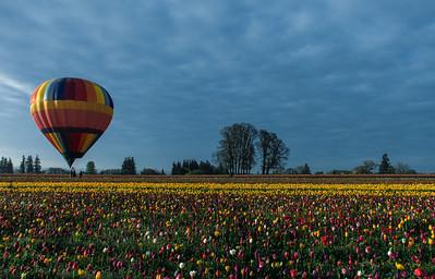 Baloon and Tulips