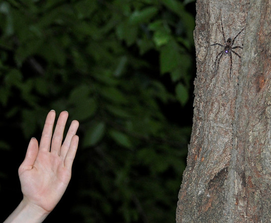 that is the size of it, freaky...