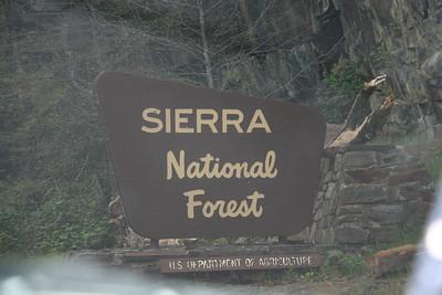 Day 7 - SF - Muir Woods - Yose - 042211