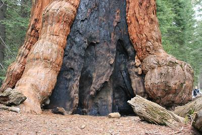 Day 9 - Yosemite and Mariposa Grove