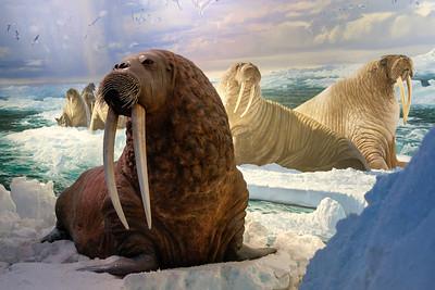 wow_walrus-3020