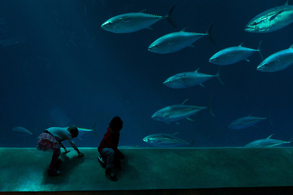 The kids take a closer look at a school of tuna